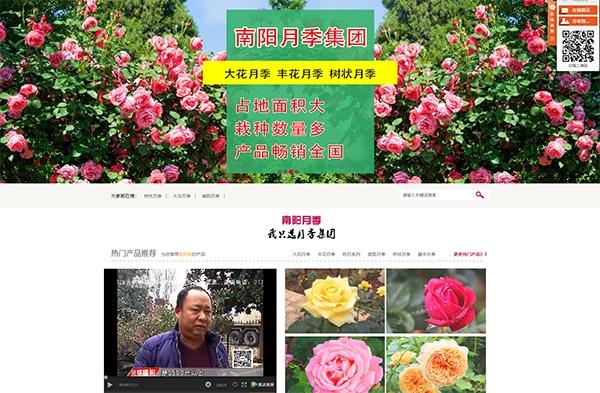 南陽網絡公司—南陽月季集團公司